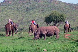 South Africa Elephant Back Safaris