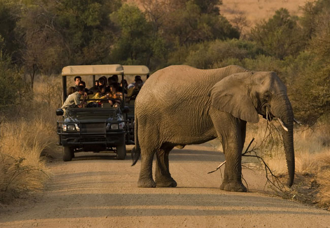 Game Viewing in South Africa
