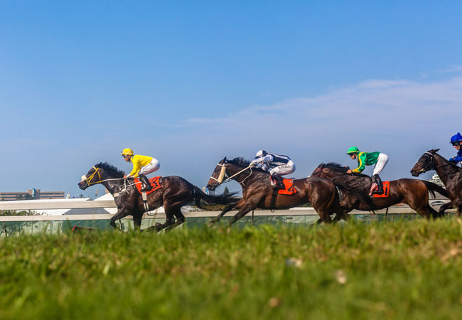 south africa horse racing odds