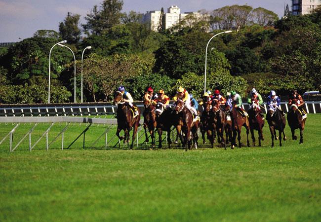 sa horse racing