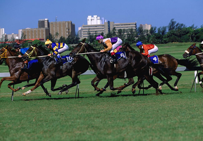 South Africa Horse Racing Tips