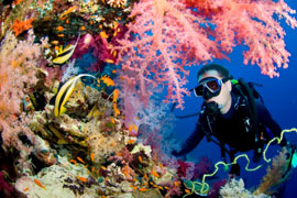 Scuba Diving in Sodwana Bay National Park