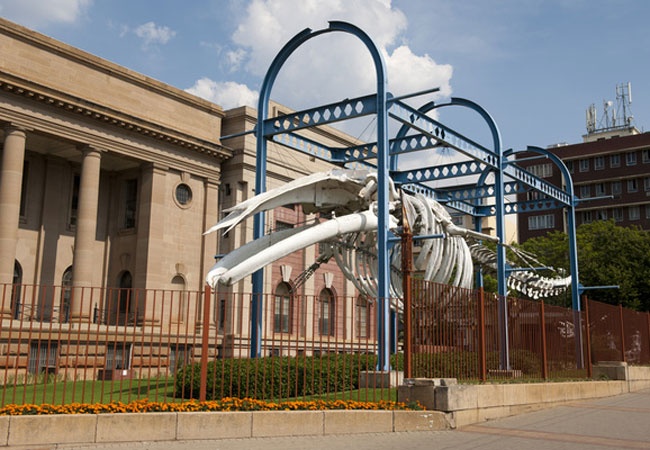 Museum Of Natural History Pretoria