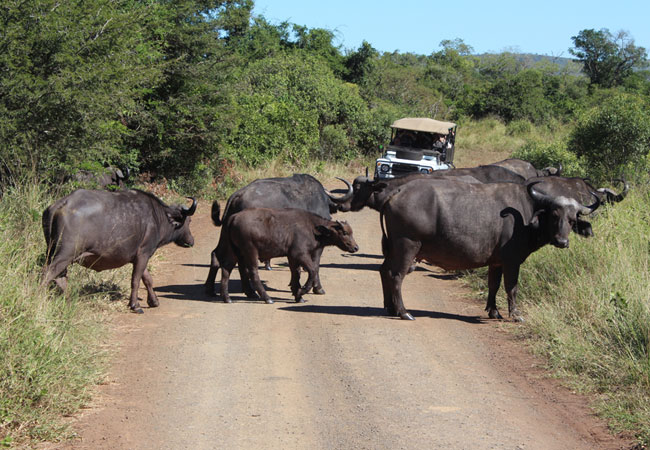 kruger park mapnoteworthy attractions see all in greater kruger national park