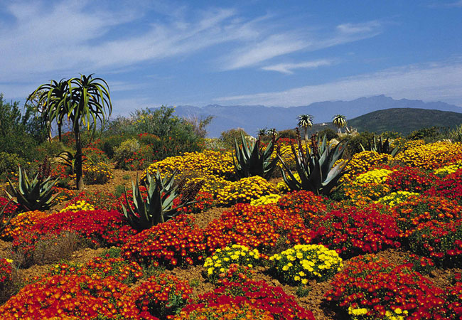 Karoo Desert National Botanical Garden