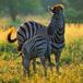 Mountain Zebra National Park, Eastern Cape