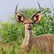 Thomas Baines Nature Reserve, Eastern Cape