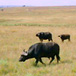 Heia Safari Game Reserve, Johannesburg