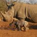Plumari Game Reserve, Johannesburg