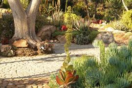 Walter Sisulu National Botanical Gardens, Gauteng