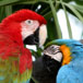"A Visit to ""Birds of Eden"" in Plettenberg Bay"