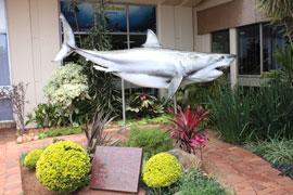 Natal Sharks Board, Durban