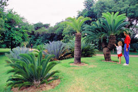 The Botanical Garden in Nelspruit, Mpumalanga