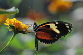 Butterfly World, Cape Winelands