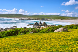 West Coast National Park in Cape West Coast