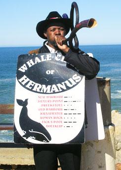 Hermanus Whale Crier