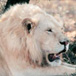 Sanbona Wildlife Reserve, Cape Town