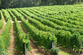 Tulbagh Wine Route, Cape Winelands