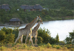 Game Lodge / Safari Accommodation in South Africa