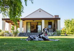 Pet Friendly Accommodation in South Africa