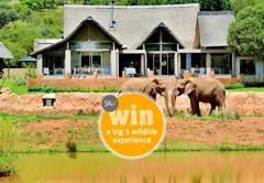 Win a Big 5 Wildlife Experience