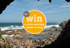 Win a Whale Watching Experience