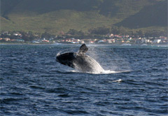Private Hermanus Whale Route Tour