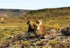 2 day Sanbona Safari