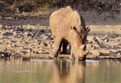 4 day Wild and Scenic Mpumalanga