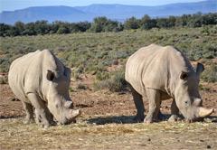 1 Day Inverdoon Safari
