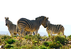 2 Day Inverdoorn Safari