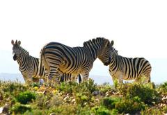 2 Day Inverdoorn Safari
