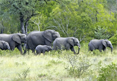 Mpumalanga Package Tours