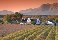 Private Cape Winelands Tour (Half Day)