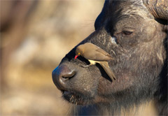 2 Day Pilanesberg Lodge Safari