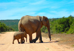 Private Addo Elephant National Park Tour