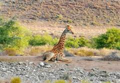 3 Day Sanbona Safari