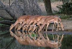 3 Day Pilanesberg Safari