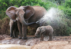 6 Day Garden Route & Addo Elephant National Park