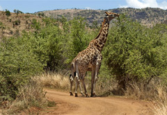 One Day Pilanesberg Safari