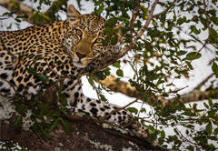Wildlife Photographic Safaris