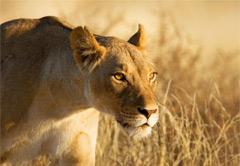 Rhino & Lion Park Tour