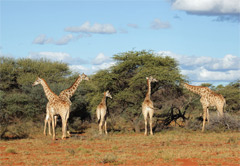 3 Day, 2 Night Traditional Safari
