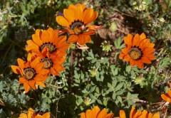7 day Train Namakwa Flower tour from Joburg