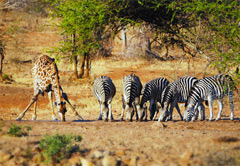 4 day Kruger Lodge Experience