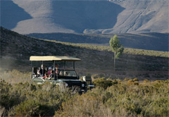 5-Day Best of the Cape & Aquila Game Reserve (E