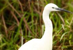 3 Day Zaagkuildrift Borakalalo Birding Tour