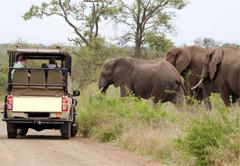 4 Day Family Safari