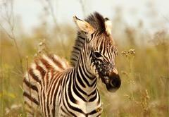 4 Day Welgevonden Safari