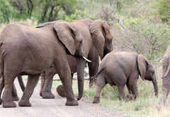 5 Day In the Footsteps of the Elephant Whisperer Safari Tour
